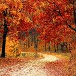 秋は自然を満喫  癒し空間でリフレッシュできるおすすめデートスポット